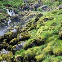 Зеленый мох у ручья :: Николай Танаев