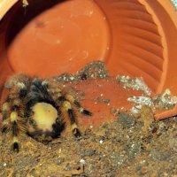 Сколько ног у паука? :: Наталья Джикидзе (Берёзина)