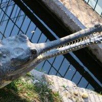крокодил греется на солнце :: vasya-starik Старик