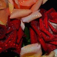 потные розочки :: Роза Бара