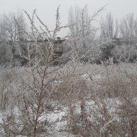 На пустыре холодный ветер свищет... :: Галина