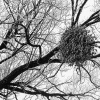 Гравюра зимы :: Оксана Лада