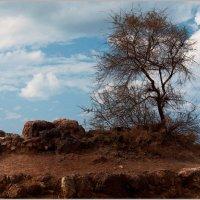 Дерево на берегу моря. :: Lmark