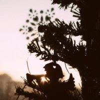 Вечерний ангел. :: сергей лебедев