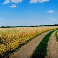 Дорога через пшеничное поле :: Михаил