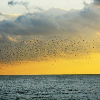 Чайки летят.. :: Дмитрий Петренко