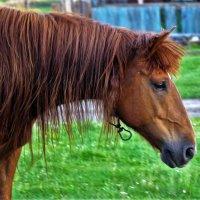 Портрет грустной лошади :: Сергей Чиняев