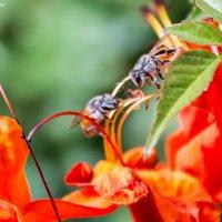 Пчелки :: Kristina Suvorova