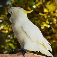 Попугай :: Асылбек Айманов
