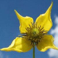 Цветок и небо, день чудесный! :: ponsv