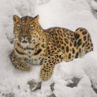 Кошка :: Михаил Измайлов
