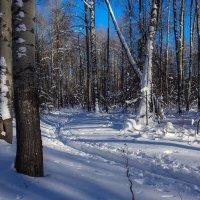 Редкий солнечный день в лесу :: Вера