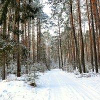 Зимой в сосновом бору :: Милешкин Владимир Алексеевич