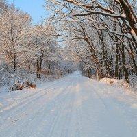 Зима :: Vladimir Nedosekin