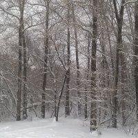 Зимний лес под новый год :: Владимир Ростовский