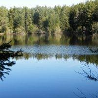 Красивое озеро :: Светлана Громова
