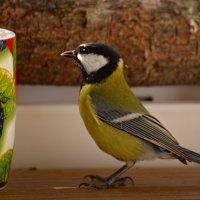 любопытство :: linnud