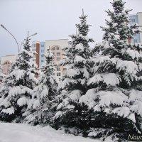 Пасмурно и снежно :: Лидия (naum.lidiya)