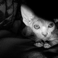 Люси после сна :: Марина Влади-на