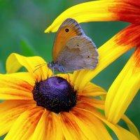 на ярком цветке :: Александр Прокудин