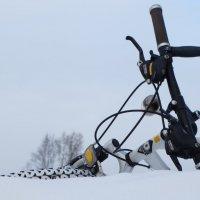 зимние велопрогулки :: Михаил Жуковский