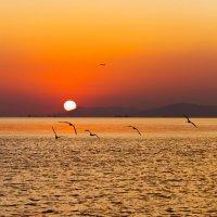 Закат на море. :: Владимир Лазарев