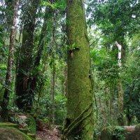 Тропики Австралии. :: Лара Гамильтон