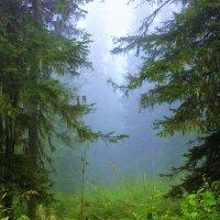 А в тайге по утрам туман... :: Сергей Чиняев