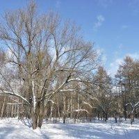 Январь в городском парке :: Alexandr Zykov