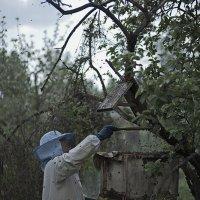 пчела появилась раньше человека...и будет жить после) :: Александр Русинов
