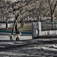 через мост собака бежала... :: Александр Корчемный