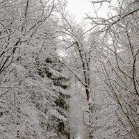 Зимний лес :: Николай Бирюков