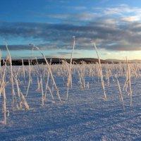 Трава на замёрзшем озере. :: Галина Полина