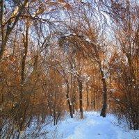 Зимний лес. :: Татьяна ❧