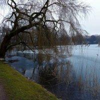 Воскресная прогулка (серия). Ива у озера :: Nina Yudicheva