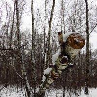Жизнь после жизни :: Андрей Лукьянов