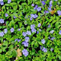 В весеннем ботаническом саду :: Светлана