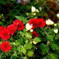 октябрьские цветы :: Александр Прокудин