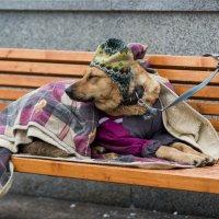 Когда на улице мороз :: Александр Степовой