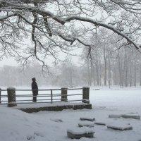 Снегопад....Любуясь красотой... :: Наталья