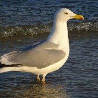 Чайки на море - клуша :: Маргарита Батырева
