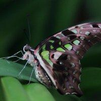 Спящая бабочка. :: Павел Халитов