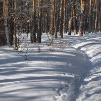Январь,а снег по февралю... :: Лесо-Вед (Баранов)