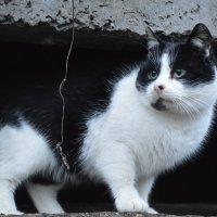 Cat :: Sony 2 Sony 2