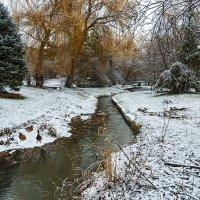 Серые шейки на зимней прогулке :: Юрий Яловенко