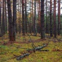 В рогатом лесу... :: марк