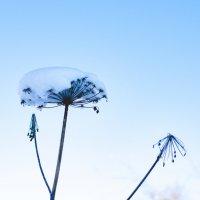Зима наступила настолько быстро, что цветок не успел завять :: Сергей Алексеев