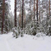 Зимний лес таит свои чародейные тайны, снежные секреты :: Павлова Татьяна Павлова