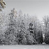 Серебряная зима. :: Любовь Чунарёва