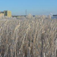 Вырастает город Северодвинск! :: Михаил Поскотинов